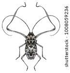 harlequin beetle entomology... | Shutterstock . vector #1008059236