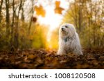dog is sitting in the foliage | Shutterstock . vector #1008120508
