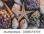 Macro View Seashells Starfish Many - Fine Art prints