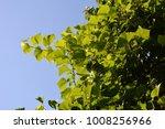 grape leaves on the background... | Shutterstock . vector #1008256966
