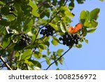 branches with berries on... | Shutterstock . vector #1008256972