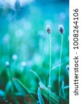 vintage plants. green grass in... | Shutterstock . vector #1008264106
