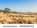 De Loonse en Drunense Duinen  form one of the largest living sand drifts of Europe with special flora and fauna and groups high pine trees standing on exposed tree roots