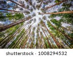 the trees pine on sky... | Shutterstock . vector #1008294532