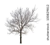 Tree Without Leaves Isolated O...