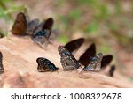 Three Blue Tiger Butterfly On...