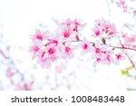 flowers pink wild himalayan... | Shutterstock . vector #1008483448