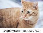 Stock photo ginger cat on the bed 1008529762