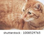 Stock photo ginger cat on the bed 1008529765