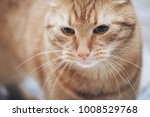 Stock photo ginger cat on the bed 1008529768