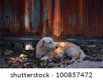 Street Dog Lie On Soil Field