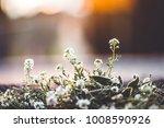 beautiful meadow flowers | Shutterstock . vector #1008590926