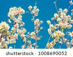 branch with beautiful white... | Shutterstock . vector #1008690052