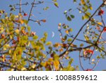 the moon and blur of bombax... | Shutterstock . vector #1008859612
