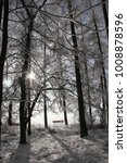 Seclusion In Frozen Forest Wit...