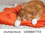 bright red cat sweetly sleeping ... | Shutterstock . vector #1008887755