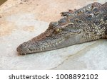 crocodile saltwater thailand | Shutterstock . vector #1008892102