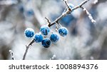 Abstract Frozen Twig With...