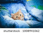 ginger cat on the bed | Shutterstock . vector #1008941062
