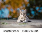 Stock photo a cute little gray cat lying on the cement floor bokeh background 1008942805