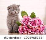scottish kitten portrait. cat... | Shutterstock . vector #1008965386