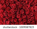 natural red roses background | Shutterstock . vector #1009087825