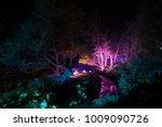 Small photo of A illuminated forest, giving it an enchanted/haunted feeling