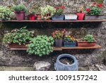 flowers in the small alley on... | Shutterstock . vector #1009157242