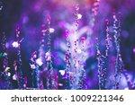 flowers. outdoor photo with... | Shutterstock . vector #1009221346