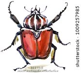 beetle. bug insect watercolor...   Shutterstock . vector #1009257985