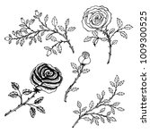 hand drawn sketch style.  rose... | Shutterstock .eps vector #1009300525