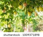 Passion fruit image - stock photo