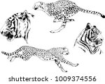 vector drawings sketches... | Shutterstock .eps vector #1009374556