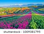 Panoramic Flower Gardens...
