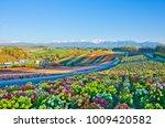 panoramic flower gardens...   Shutterstock . vector #1009420582