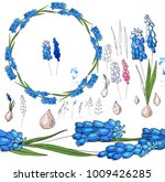 set with blue muscari on white. | Shutterstock .eps vector #1009426285