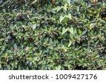 natural view green foliage... | Shutterstock . vector #1009427176