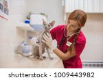 hairless sphinx cat with... | Shutterstock . vector #1009443982