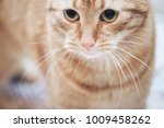 Stock photo ginger cat on the bed 1009458262