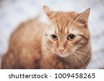 Stock photo ginger cat on the bed 1009458265