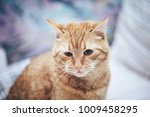 Stock photo ginger cat on the bed 1009458295