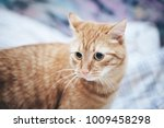 Stock photo ginger cat on the bed 1009458298