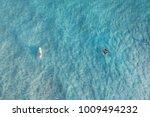 manta ray and surfer at... | Shutterstock . vector #1009494232