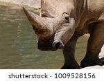 white rhinoceros or square... | Shutterstock . vector #1009528156