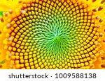 Sun Flower In Macro