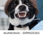 funny dig smile  | Shutterstock . vector #1009632262