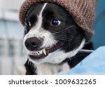 funny dig smile  | Shutterstock . vector #1009632265