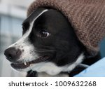 funny dig smile  | Shutterstock . vector #1009632268