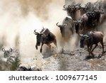Wildebeest Crossing The Mara...