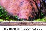 tunnel of pink flower tree ... | Shutterstock . vector #1009718896